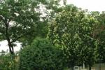 درختان جلوه های طبیعت